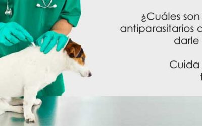 ¿Cuáles son los mejores antiparasitarios que puedes darle a tu perro? Cuida la salud de tu mascota