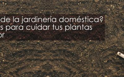 ¿Eres fan de la jardinería doméstica? 5 consejos para cuidar tus plantas de exterior
