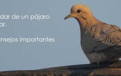 Cómo cuidar de un pájaro en tu hogar. 4 Tips y consejos importantes