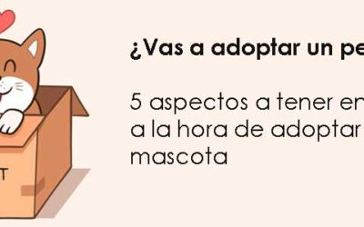 ¿Vas a adoptar un perro? 5 aspectos a tener en cuenta a la hora de adoptar una mascota