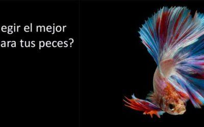 ¿Cómo elegir el mejor acuario para tus peces?